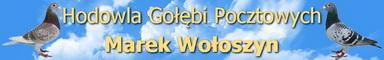 Marek Wo�oszyn - Hodowla Go��bi Pocztowych